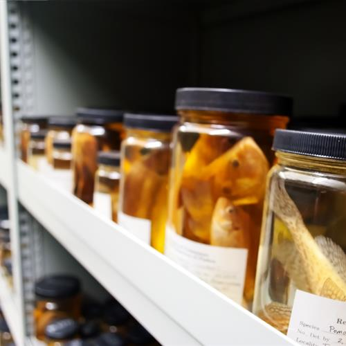 Compact Storage for Biology Fish Collection at University of Tennessee
