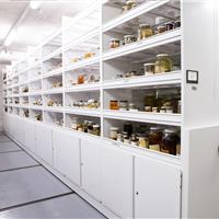 Specimen collections on mechanical assist mobile shelving system at California Academy of Sciences Building