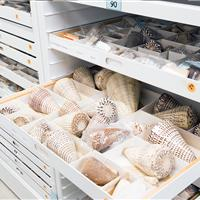 Seashells on drawer in mobile shelving system at California Academy of Sciences