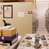 Mechanical Assist storage system for artifact storage at the Burke Museum