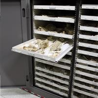 Fossil Artifacts in storage cabinet with drawer attachment