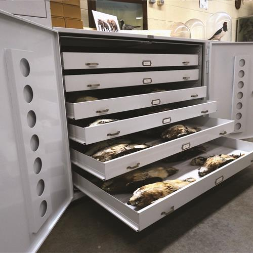 Ornithological Collection in Museum Cabinet Drawers at University of Wisconsin Zoological Museum