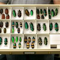 Entomology collection drawers are organized and provide preservation.jpg