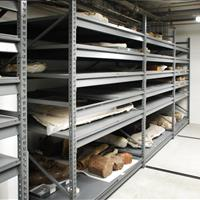 Raymond Alf Museum Shelving with fossils