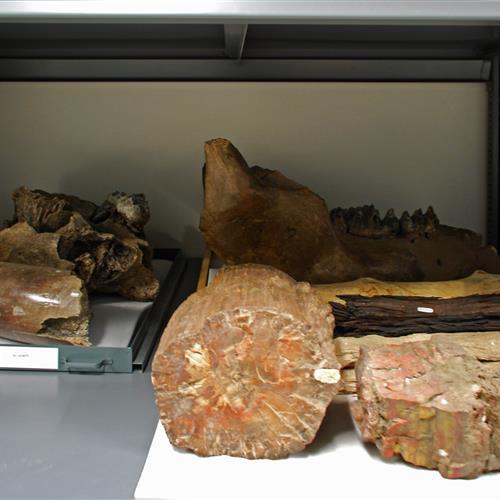 Fossil storage at Raymond Alf Museum