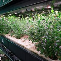 Hydroponic indoor growing on moving shelving.jpg