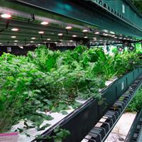 Urban farm hydroponic grow operation racking on rails.jpg
