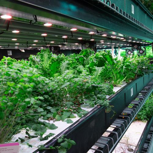 Urban farm hydroponic grow operation racking on rails.jpg