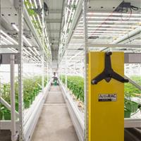 Cannabis grow facility save space .jpg