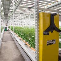 High yield cannabis grow facility.jpg