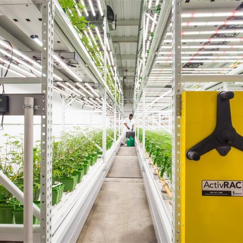 Indoor farming in California.jpg