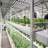 ActivRAC is the perfect solution for this cannabis grow facility.jpg