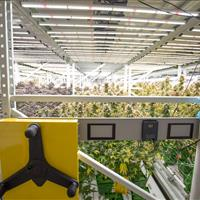 Cannabis farming facility .jpg