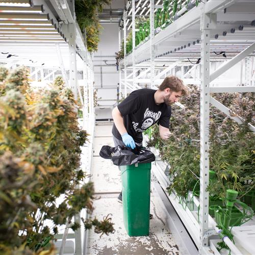 ActivRAC system optimizes space at cannabis grow facility.jpg