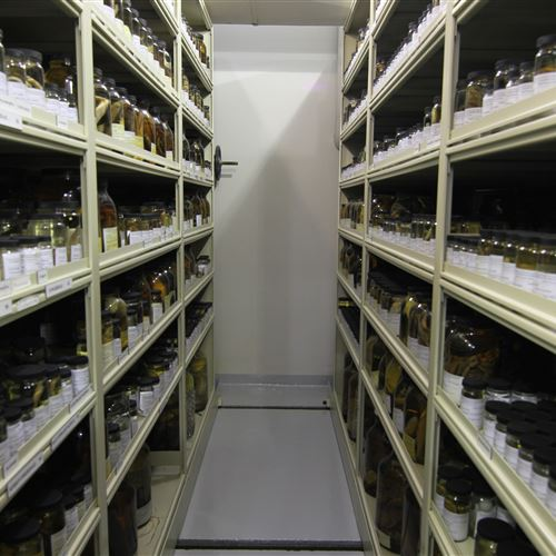 Adult Fish Samples on Compact Shelves