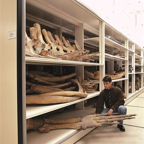 Mobile Shelving Systems House Whale Bones