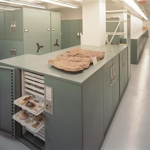 Consolidated Museum Storage Leads to Improved Safety and Efficiency at Peabody Museum of Natural History